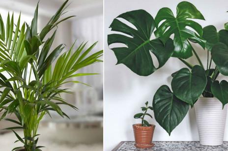Najmodniejsze rośliny doniczkowe do domu