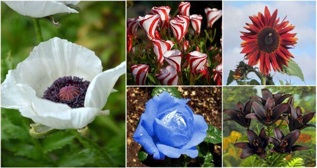 Znane kwiaty w nietypowym wydaniu