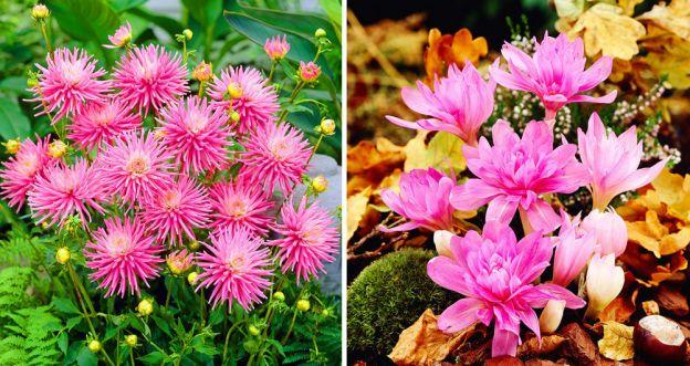 Najpiękniejsze jesienne kwiaty