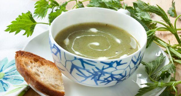 Przepis na zupę z pokrzywy. Jest szybka, prosta i bardzo zdrowa