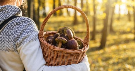 woman-with-mushrooms-in-wicker-basket-in-autumn-forest-picture-id1160765957