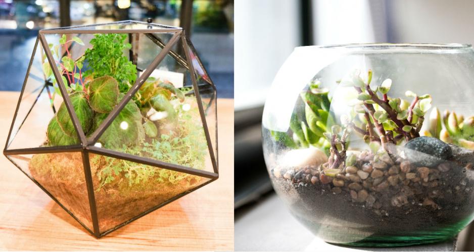 Miniaturowy Ogród W Szkle Diy Jak Go Zrobić Krok Po Kroku
