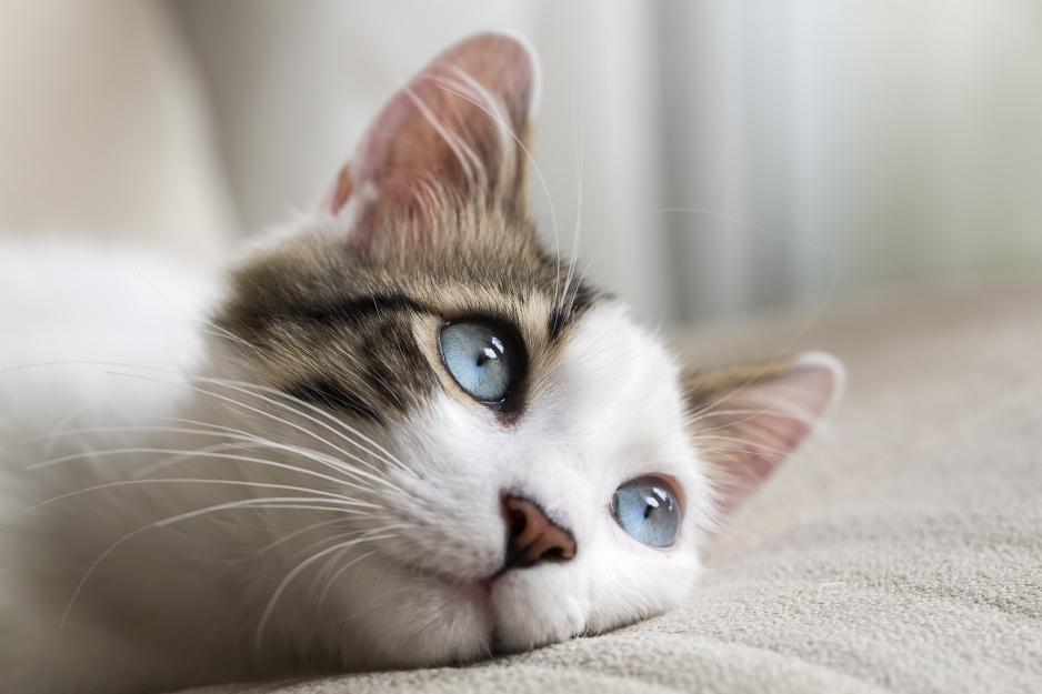 Sennik Kot Znaczenie Snu O Kocie Claudia