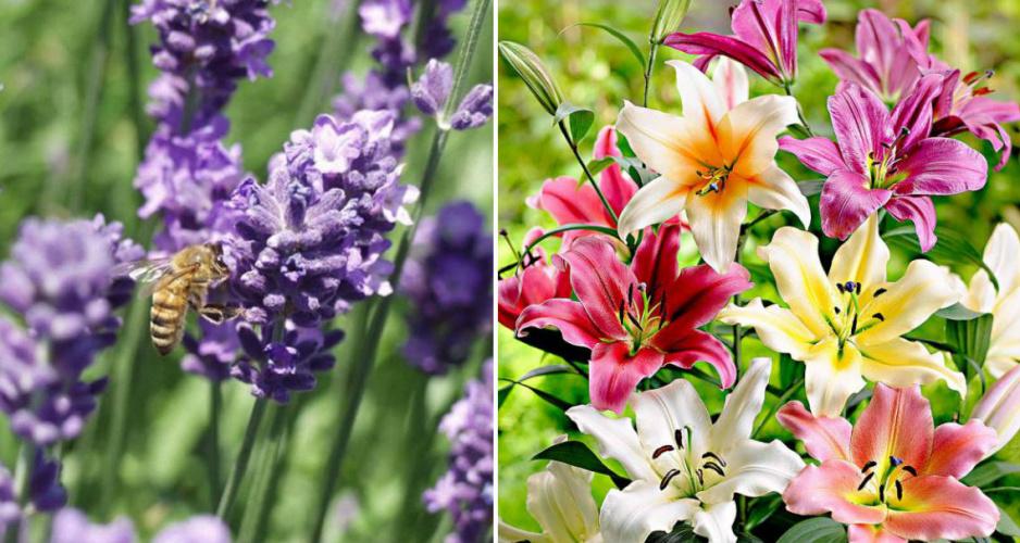 Pachnące rośliny domowe – atrakcyjny wybór