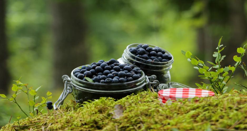 Czarne jagody - moc korzyści dla zdrowia i urody