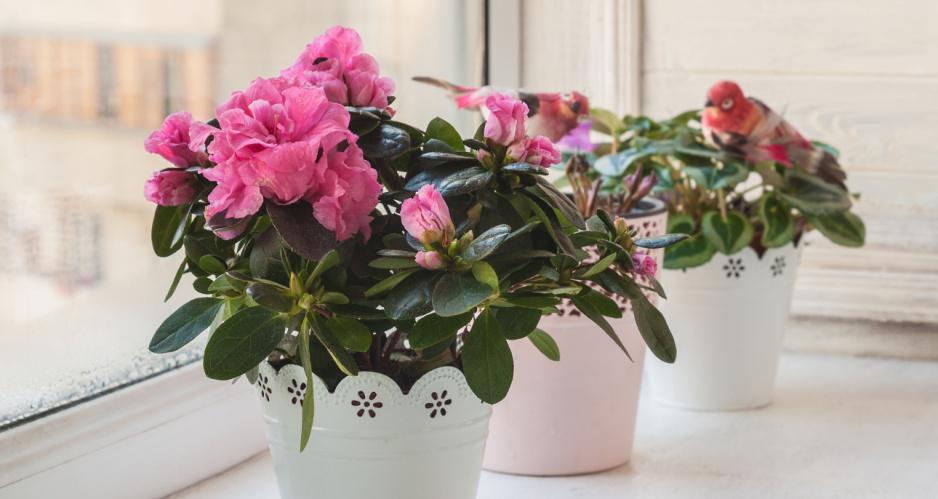 6 Kwiatów Które Kwitną Cały Rok Claudia
