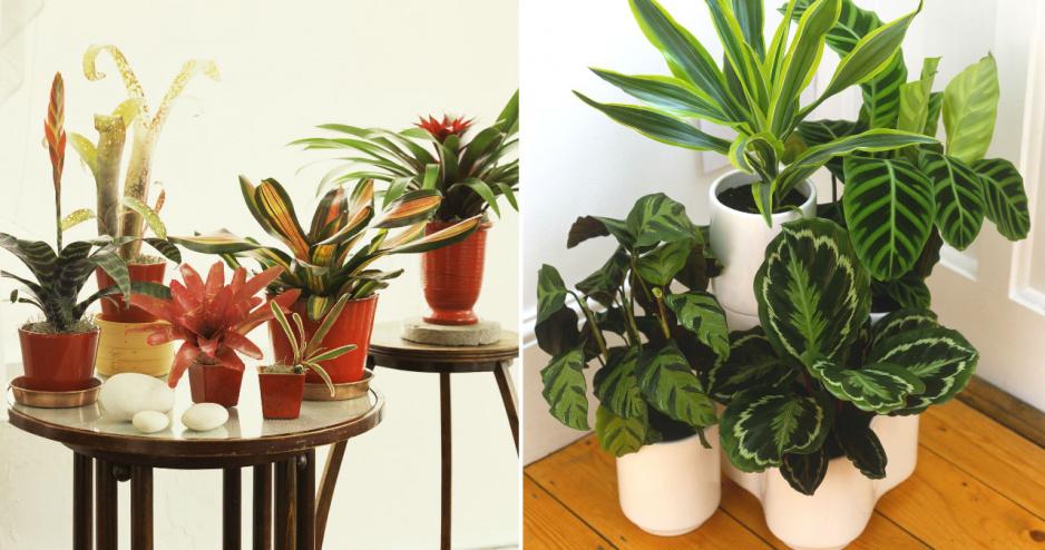 10 Roślin Które Przetrwają Nawet W Najciemniejszym Miejscu