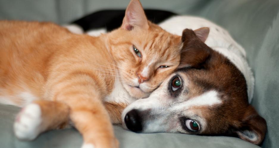 Pies I Kot Na Zdrowie O Korzyściach Płynących Z Relacji Ze