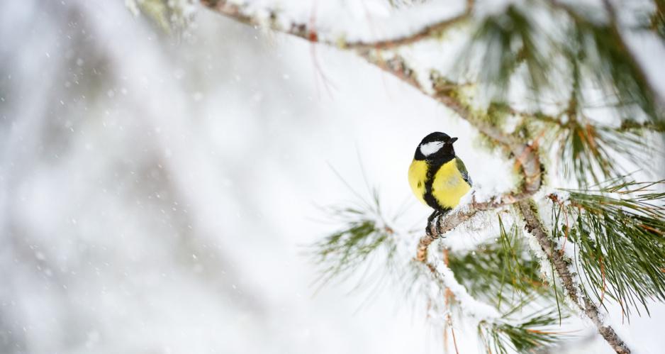 Jak Zimą Zadbać O Zwierzęta Claudiapl