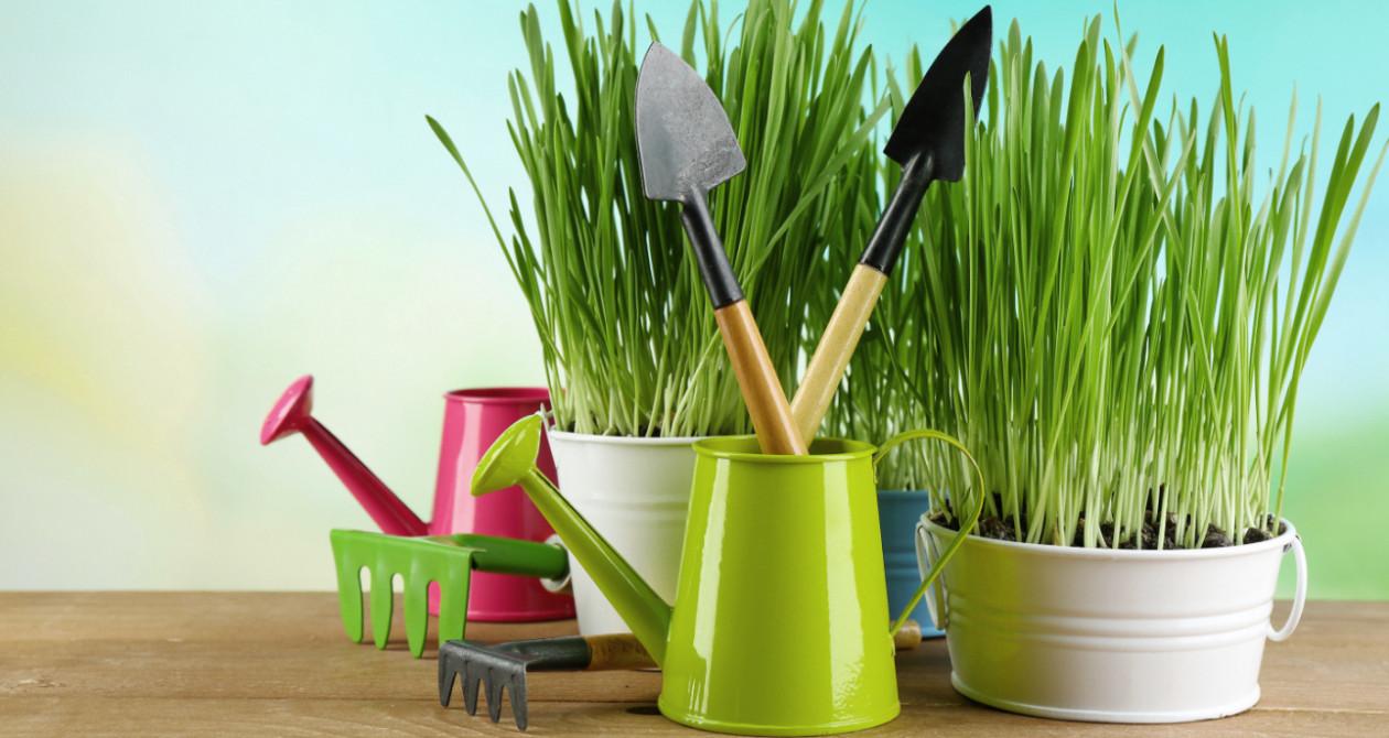 domowy ogródek - Wiosenny ogródek na parapecie - jak go wyhodować?