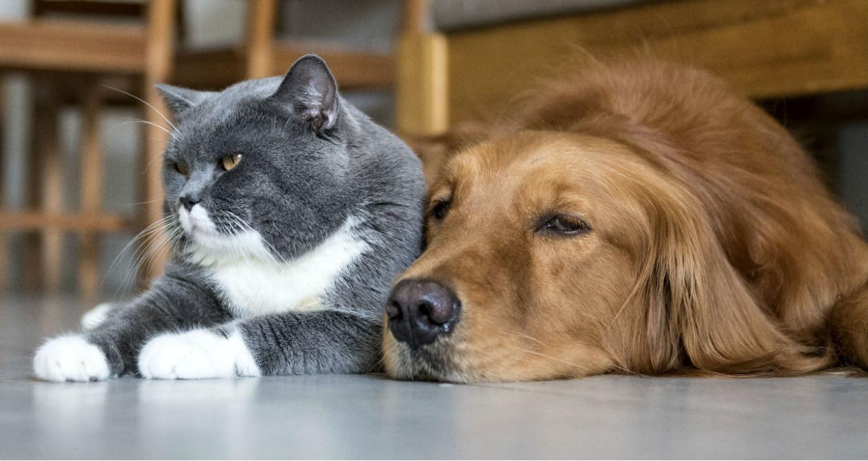 Kot I Pies W Domu Jak Utrzymać Czystość Mieszkając Z Kotem Lub Psem