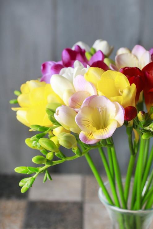 Frezja Znaczenie Kwiatów I Ich Kolorów
