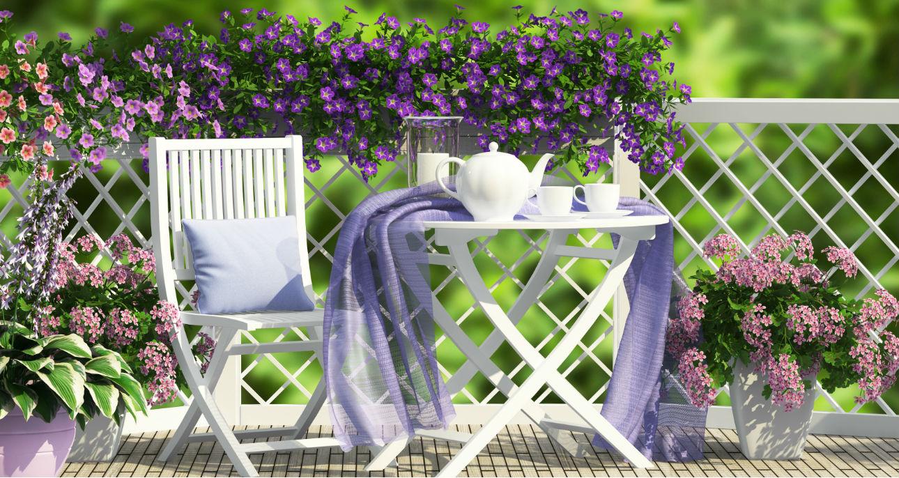 Kwiaty Na Balkon Od Strony Polnocnej Co Wybrac Claudia Pl