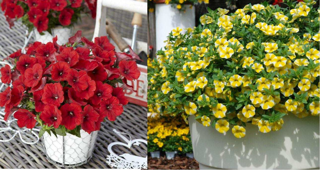 Kwiaty Na Balkon Propozycje Na Cztery Strony Swiata Claudia Pl