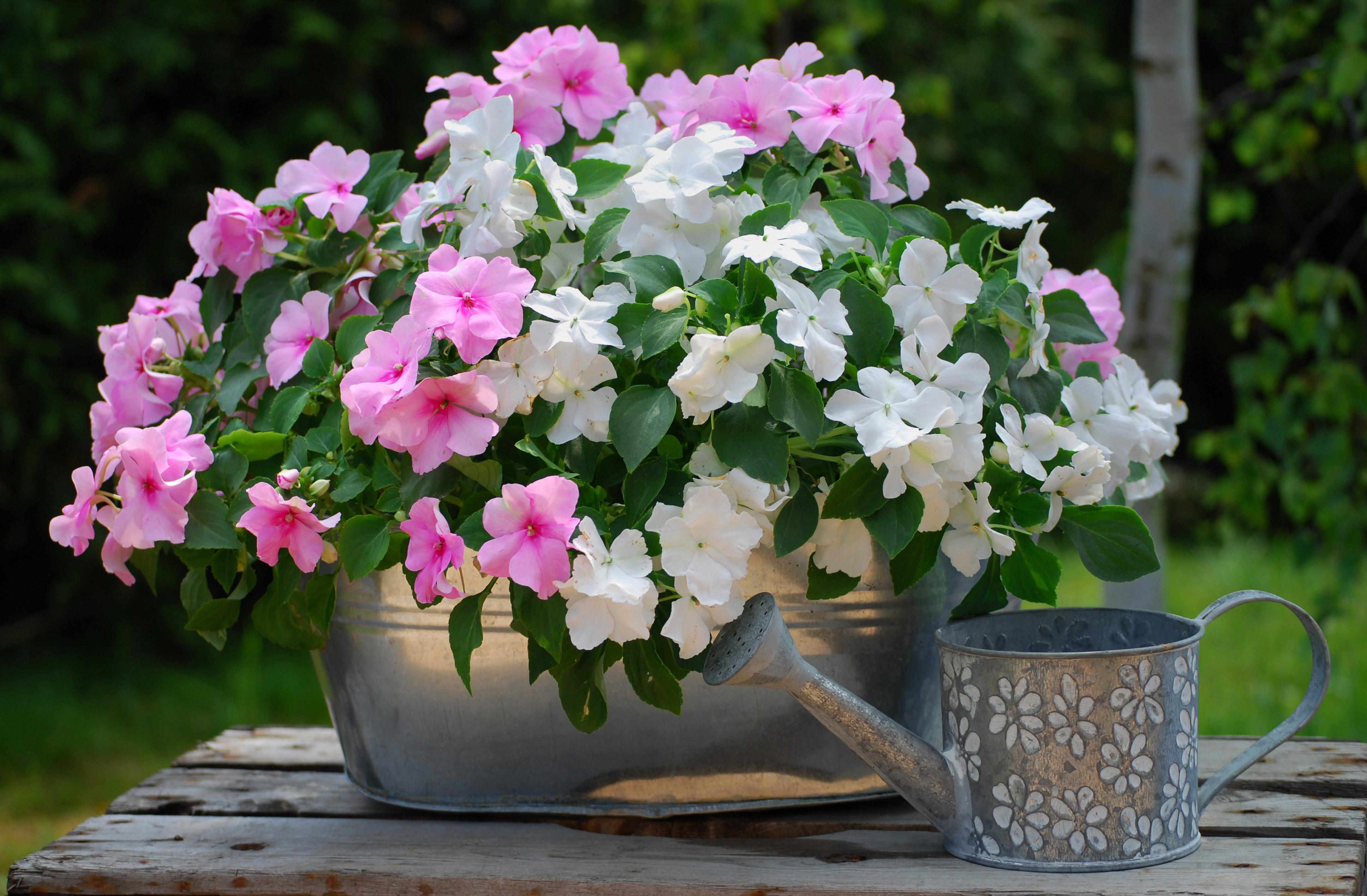 Kwiaty Na Balkon Propozycje Na Cztery Strony świata Claudia