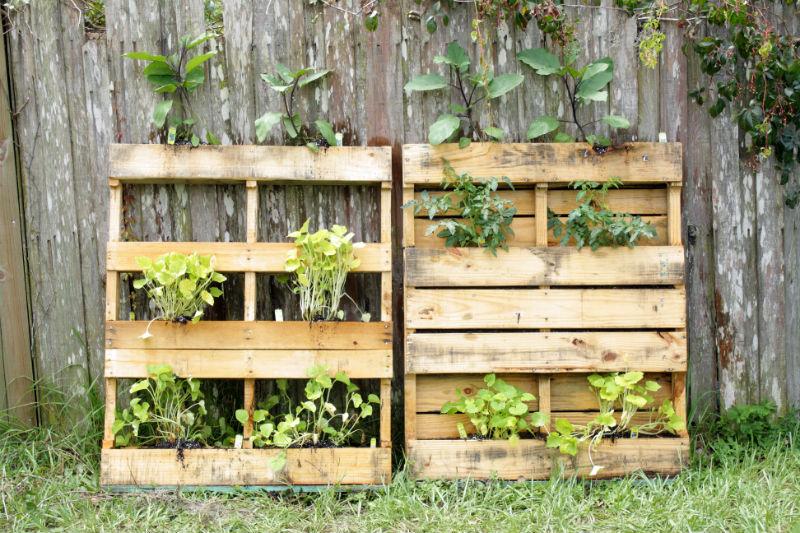 Ogród wertykalny z palety - jak go zrobić?